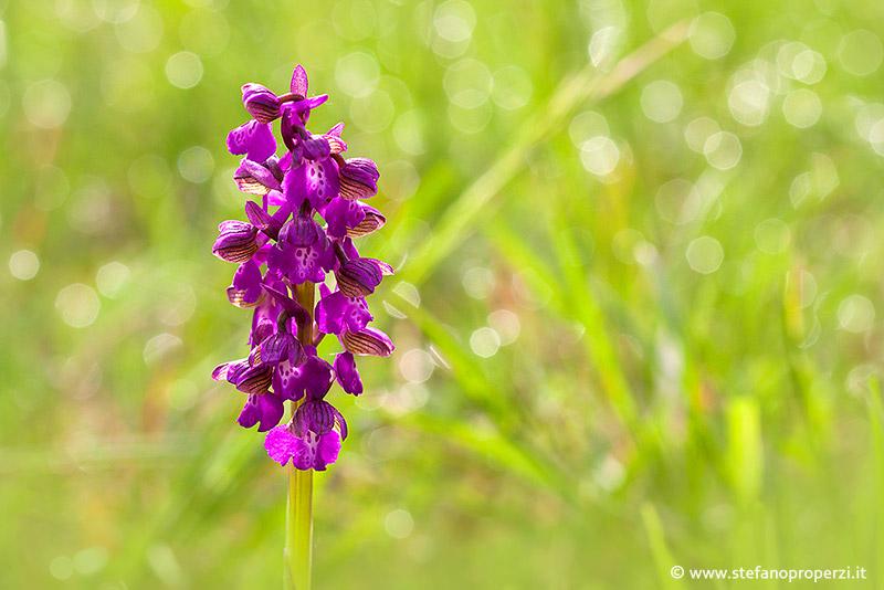 fotografia alla fioritura